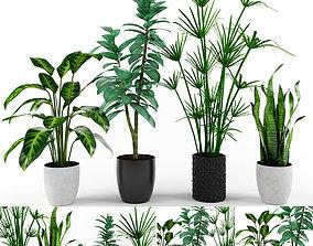 ficus 3D PLANT COLLECTION