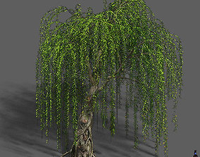 3D model Plant - Willow 12