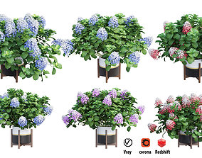 Plants Hydrangea set 10 branch 3D model