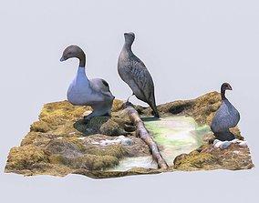 Bird display 2 3D model