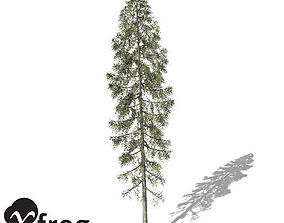 XfrogPlants Black Spruce 3D model