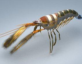 Alpheidae Pistol Shrimp 3D model