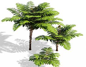 3D model Fern tree