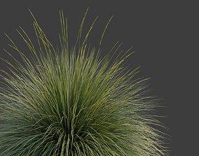3D model XfrogPlants Deergrass - Muhlenbergia Rigens