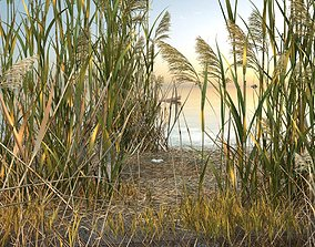 Urban Lakes - swamps - reeds 3 3D