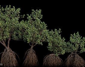 nature 3D model Grey Mangrove