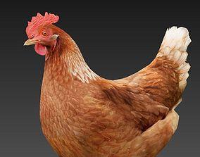 3D asset VR / AR ready Hen chicken