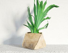 plant 30 am141 3D