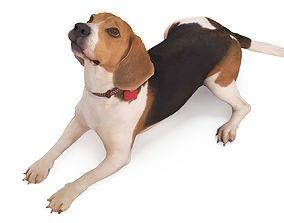 Beagle Lying 3D