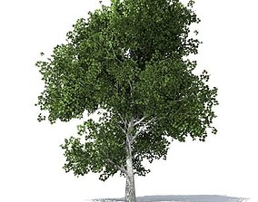 maple tree 3D model