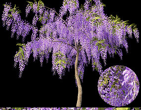 3D model Fabaceae - Wisteria sinensis 1