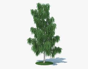 3D model vegetation Birch Tree