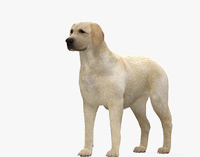 Labrador Retriever HD 3D model