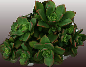 Kleinia plant 3D scan - Low Polygon low-poly