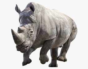 Big White Rhino Animated 3D asset