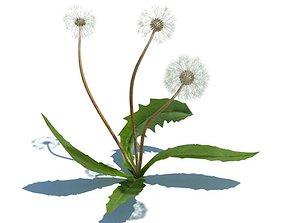 3D Small Dandelion Plant
