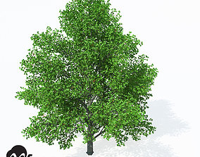XfrogPlants Grey Alder 3D model
