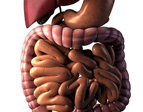 3D abdomen Digestive system