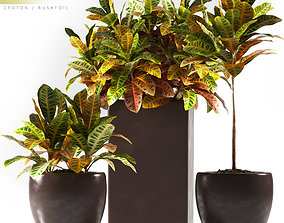 Plant 75 3D model