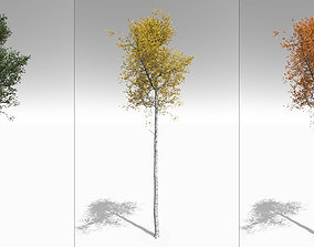 3D model Seasonal Tall Mature Quaking Aspen - Variation 1