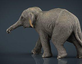 Asian Elephant Babe 3D model