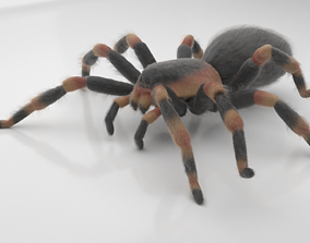 3D model animated Tarantula