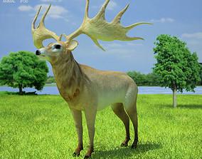 3D model Irish Elk Megaloceros Giganteus