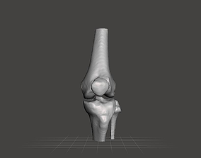 3D model Left knee joint - female