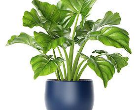 3D Plant pot interior