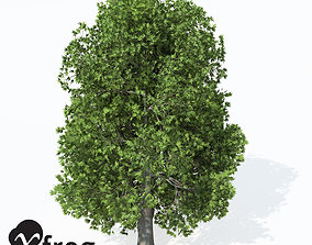 3D model XfrogPlants Oriental Planetree