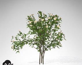 3D model XfrogPlants Dog Rose