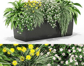 3D Plants collection 435