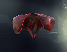 3D Human Diaphragm Anatomy