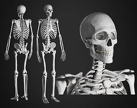 Anatomical Male Skeleton Sculpt 3D model skeleton