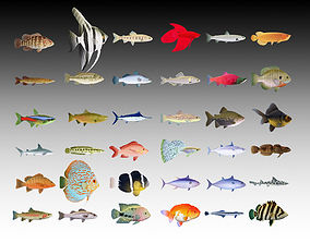 3D Fish collection - 36 model