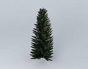 Norfolk Island Pine 4 3D model
