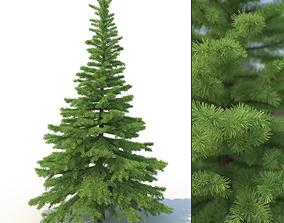 Spruce Tree No 1 3D