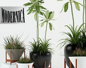 Plants collection 77 Modernica pots 3D model