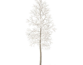 American Elm with Snow 3point3m 3D