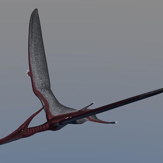 Pterodactyl Antiquus