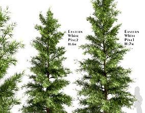 3D model Set of Eastern White Pine or Pinus Strobus 3