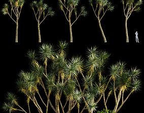 Yucca gloriosa - Gloriosa or Soft-Tip 3D model