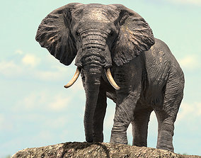 rigged African Elephant Rigged model