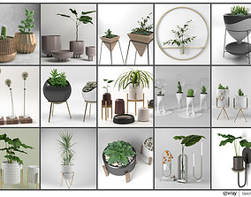 Pot and Plant Collection 3D