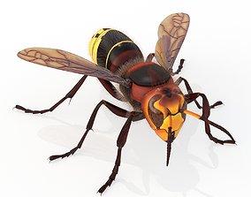 3D asset Hornet