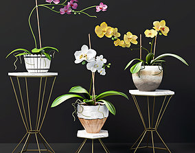 Orchid flowers 3D model rigged