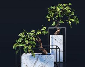 3D model Bonsai trees