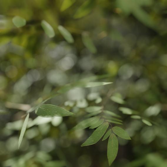 tree closeup shot