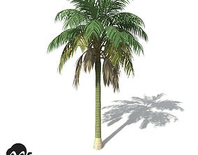 3D model XfrogPlants Kentia Palm