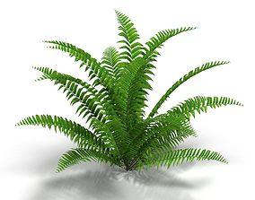 3D model Fern bush 1